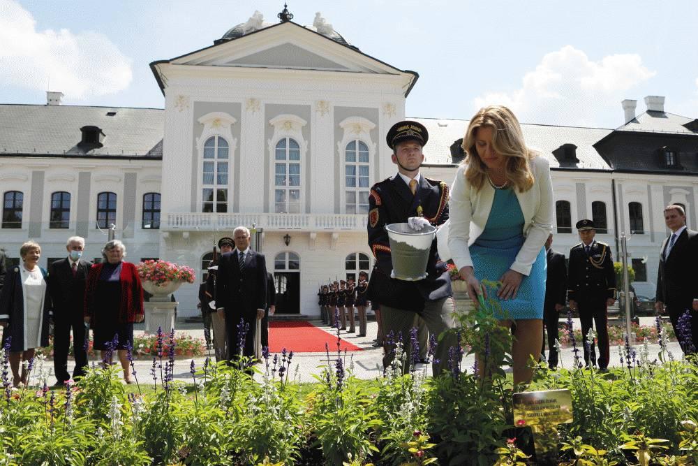 Ruža Generál Štefánik už rastie aj v Prezidentskej záhrade