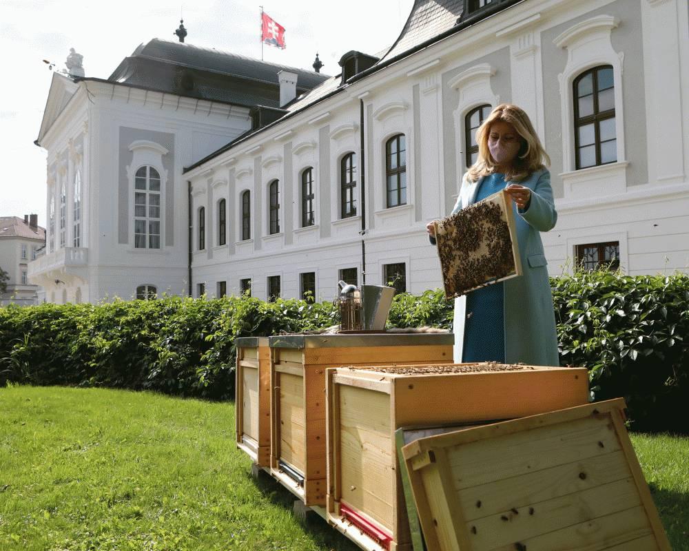 Mestské včely sú už aj v Prezidentskej záhrade