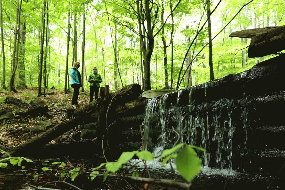 Sucho podľa prezidentky ohrozuje aj lesy