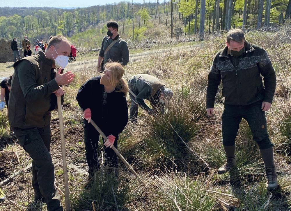 V lese nad Limbachom pribudlo 1650 stromov